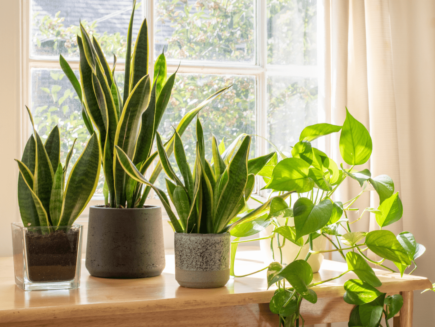 plantas-de-interior-blog